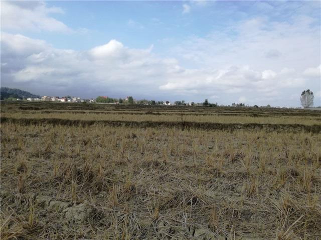 خرید زمین کشاورزی 18000 متری در نور