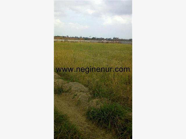 زمین کشاورزی دونبش