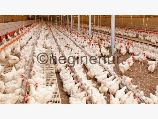 فروش مرغداری فول مکانیزه 10000تایی در محمودآباد