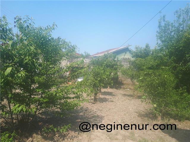 فروش باغ با درخت پرتقال آهودشت