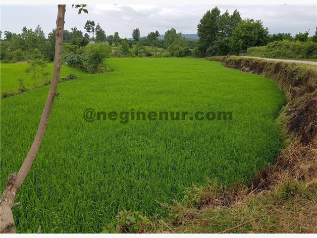 فروش زمین باغی و کشاورزی آمل